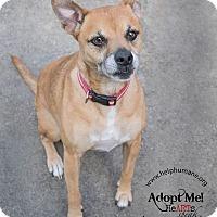 Adopt A Pet :: Annie - Belton, MO