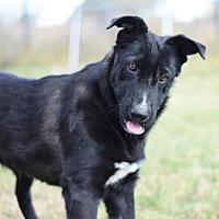 Adopt A Pet :: Dharma - Dodson, MT