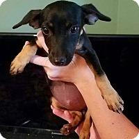 Adopt A Pet :: Mini - Ellaville, GA