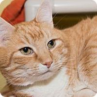 Adopt A Pet :: Jake - Lowell, MA
