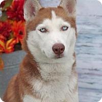 Adopt A Pet :: Teeko - Inverness, FL