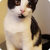 Adopt A Pet :: Luna - Yorba Linda, CA
