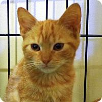 Adopt A Pet :: Amelia - Durham, NC