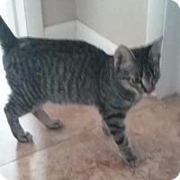 Adopt A Pet :: Bowie - Glendale, AZ