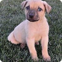 Adopt A Pet :: Teletubbies: Po Frolic - Palo Alto, CA