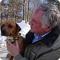 Adopt A Pet :: Odie - Kenilworth, NJ