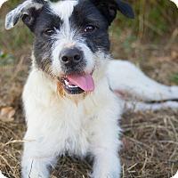 Adopt A Pet :: *Arial - PENDING - Westport, CT