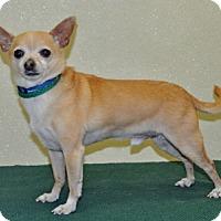 Adopt A Pet :: Wonton - Port Washington, NY