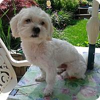 Adopt A Pet :: Romeo - Mississauga, ON