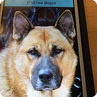 Adopt A Pet :: RED VON REGEN - Los Angeles, CA