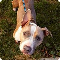 Adopt A Pet :: Elfy - Dayton, OH