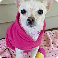 Adopt A Pet :: Chee Chee - Baton Rouge, LA