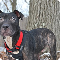 Adopt A Pet :: Preston - New Castle, PA