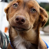 Adopt A Pet :: Tree Pup - Mulberry - Adopted! - San Diego, CA