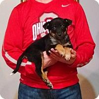Adopt A Pet :: Mia - South Euclid, OH