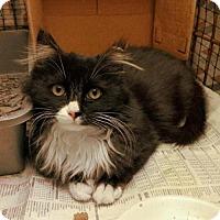 Adopt A Pet :: Mercedes Gemz - Toronto, ON