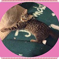 Adopt A Pet :: Rose - Mt. Prospect, IL