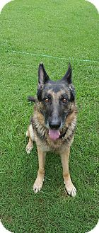 German Shepherd Dog Mix Dog for adoption in Nashua, New Hampshire - Jameson