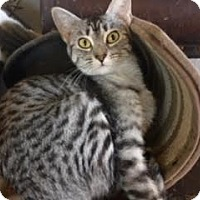 Adopt A Pet :: Peter Parker - Houston, TX