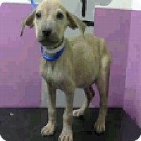 Adopt A Pet :: Sallie - Fort Collins, CO