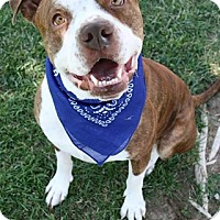 Adopt A Pet :: Clancy - Las Vegas, NV