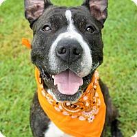 Adopt A Pet :: 1609-1535 Dumbledore - Virginia Beach, VA