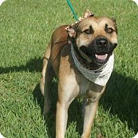 Adopt A Pet :: Nik - Kinston, NC