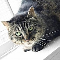 Adopt A Pet :: PK - South Amana, IA