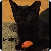Adopt A Pet :: Lansing - Great Neck, NY