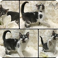 Adopt A Pet :: Boston - Joliet, IL
