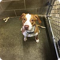 Terrier (Unknown Type, Medium) Mix Dog for adoption in Lake Odessa, Michigan - Venice