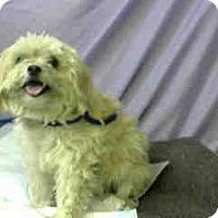 Adopt A Pet :: URGENT 12/3 @ DEVORE - San Bernardino, CA