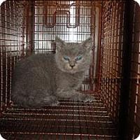 Adopt A Pet :: Aries Takumi - Raleigh, NC