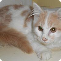 Adopt A Pet :: Oberon - Chattanooga, TN