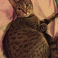 Adopt A Pet :: Alice Rose - Columbus, OH