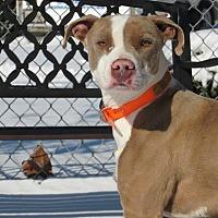 Adopt A Pet :: Yoshi - Windsor, VA