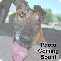 Adopt A Pet :: Thom - Tucson, AZ
