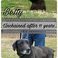 Adopt A Pet :: Betty - Springfield, MO