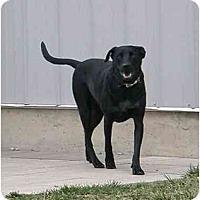 Adopt A Pet :: Lexus - Meridian, ID