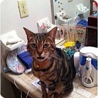 Adopt A Pet :: Sweetie - Lantana, FL