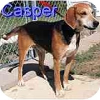 Adopt A Pet :: Casper - Wellington, OH