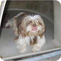 Adopt A Pet :: Gavin - Richmond, VA