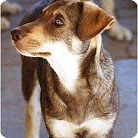 Adopt A Pet :: Reece - Gilbert, AZ