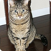 Adopt A Pet :: Pixel - Lenhartsville, PA