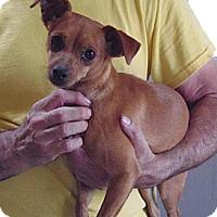 Adopt A Pet :: Sadie - Post, TX