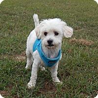 Adopt A Pet :: Chippy - West Deptford, NJ