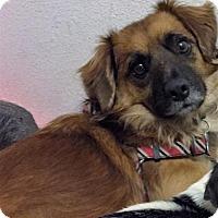 Adopt A Pet :: Heckle - Studio City, CA