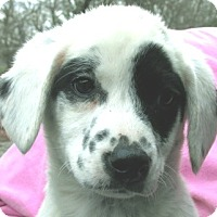 Adopt A Pet :: Fanny - Germantown, MD