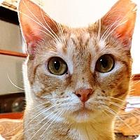 Adopt A Pet :: Katniss - Phillipsburg, NJ
