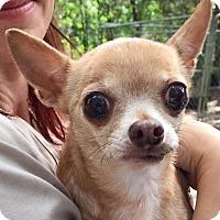 Adopt A Pet :: Ruby Marie - Orlando, FL